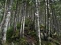 松林の稜線 - panoramio.jpg