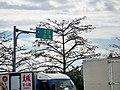 橫貫公路東勢端 Dongshi End of Central Cross-Island Highway - panoramio.jpg