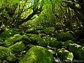 白谷雲水峡 (Shiratani Unsui-kyo Gorge) 25 May, 2013 - panoramio.jpg