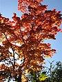 竜頭の滝‐紅葉 - panoramio.jpg