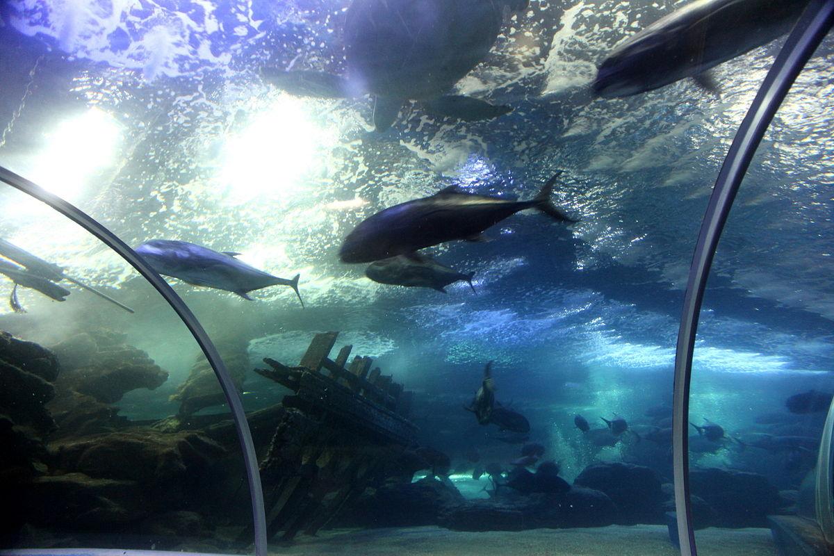 青岛的海底世界_File:青岛水族馆海底世界.JPG - 维基百科,自由的百科全书