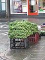 -2019-12-21 Brussel sprout sticks for sale, North Walsham.JPG