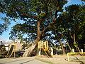 0001jfEast West Bajac-bajac Park Tapinac Olongapo City Zambalesfvf 22.JPG