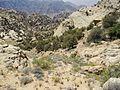 16 Rummana Mountain Trail - Looking into the Direction of Dana Village - panoramio.jpg