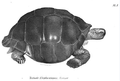 1837 BostonJournal NaturalHistory v1 plate10 BFNutting.png