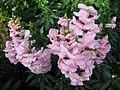 1849 - Salzburg - Mirabellgarten - Flowers.JPG