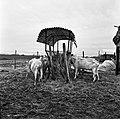 1966 Domaine expérimentale de La Sapinière à Bourges-56-cliche Jean-Joseph Weber.jpg