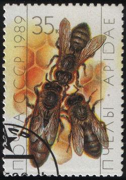 Марка СССР. Пчеловодство. Матка и рабочие пчёлы на сотах улья, 1989