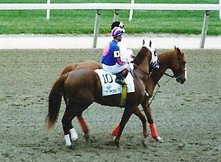 Thunder Gulch Thoroughbred racehorse
