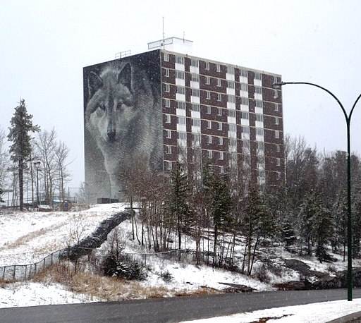 A mural of a wolf decorates the side of an apartment building along the 'Spirit Way' walking path in Thompson.