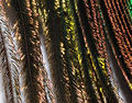 2011-12-07 12-54-33-plume-paon-86f.jpg