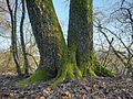 2012-03-02 17-11-04-arbre.jpg