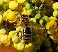 2012-04-02 14-31-49-abeille.jpg