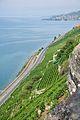 2012-08-12 10-22-34 Switzerland Canton de Vaud Rivaz.JPG