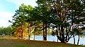 2012 - Jezioro Lipkusz , jesienne widoki. - panoramio (8).jpg