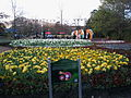 2013 Floriade Canberra 100th anniversary flower beds.jpg