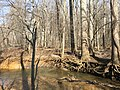 2016-02-08 13 29 49 Erosion around trees on the banks of Difficult Run between Vale Road and Lawyers Road in Oakton, Fairfax County, Virginia.jpg