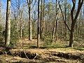 2016-03-01 13 02 27 View across an unnamed tributary of Little Difficult Run and through the forest of Fred Crabtree Park in Reston, Fairfax County, Virginia.jpg