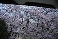 20160403 Himeji-Castle 3468 (26758652641).jpg
