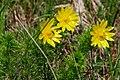 20190511 Miłki wiosenne w rezerwacie przyrody Skorocice - 1018 2470 DxO.jpg