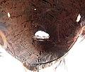 2248 5500c detail Chewa Mask (7452370078).jpg