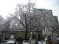 23. Bucuresti, Romania. Din Ciclul BUCURESTIUL SUB ASEDIUL FRIGULUI, Ianuarie 2019. Cimitirul Bellu Catolic. (2).jpg