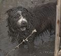 2 Dogs in Ireland Wood Quarry, Leeds. W.Yorkshire. 05.jpg