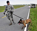 436th SFS dog handler proves his resilience 130516-F-VP913-004.jpg