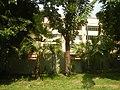71Mehan Garden Ermita Manila Universidad de Manila 06.jpg