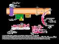 ACh-Rezeptor Mechanism.png