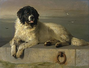 "Landseer dog - ""A Distinguished Member of Humane Society"", 1838, by Sir Edwin Landseer"