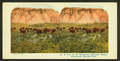 A Few of the Remaining American Bison, Yellowstone National Park, by A.C. Co..png