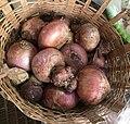 A basket of onions in Ghana.jpg
