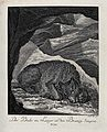 A bear resting in its cave and sucking at its paws. Etching Wellcome V0021064.jpg