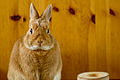 A bunny too serious (7376453146).jpg