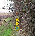 A busy footpath marker post - geograph.org.uk - 1112463.jpg