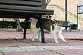 A feral cat in Malta-2016-12-25-1.jpg