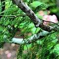 A magia das vegetações do meu Sergipe. 09.jpg