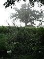 A misty morning - geograph.org.uk - 562714.jpg