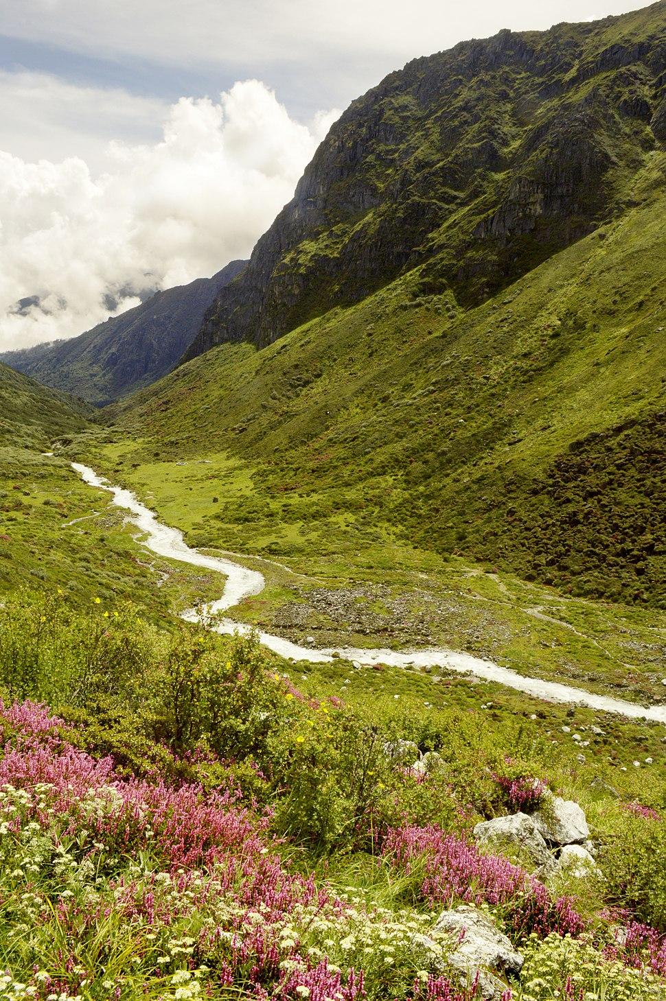 A scene from Kanchenjunga National Park, Sikkim (1)