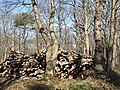 A stack of wood - geograph.org.uk - 758324.jpg