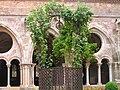Abbaye Fontfroide cloitre 11.jpeg