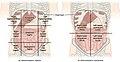 Abdominal Quadrant Regions.jpg