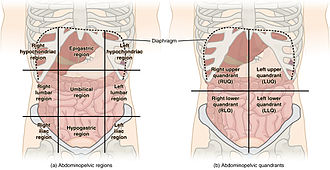 Anatomical terminology - Abdominal regions are used for example to localize pain.