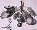 Abhandlungen der Naturforschenden Gesellschaft in Zurich (1761) (16144889754).jpg