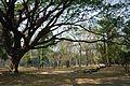 Acharya Jagadish Chandra Bose Indian Botanic Garden - Howrah 2011-01-08 9751.JPG