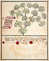 Ahnentafel 1735 Friederica Charlotta Christina von Drieberg.jpg