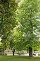 Akademski park u Beogradu (4).jpg