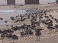 Al Buraiqeh, Yemen - panoramio - Tshihab (1).jpg