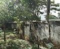 Albizia gummifera - Arusha gardens.jpg